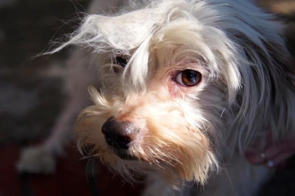 San Diego Baja Dog Rescue