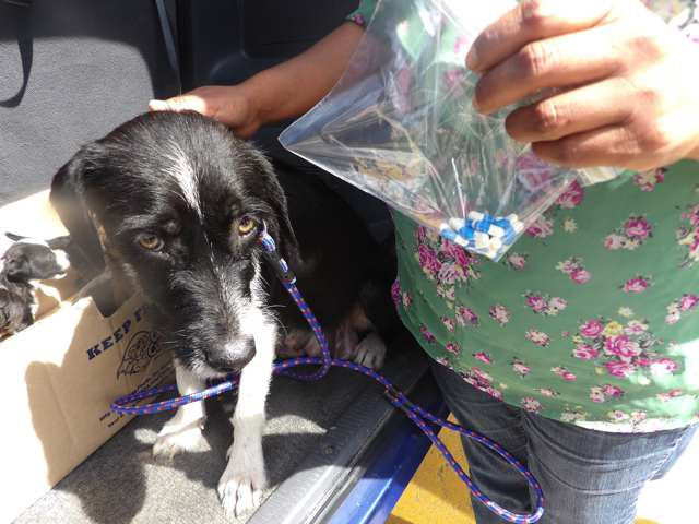 Dog Street Help-0000